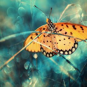 by Satriyo Andoyo - Animals Insects & Spiders