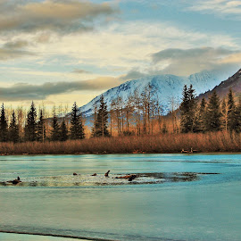 Portage Creek by Patricia Phillips - Landscapes Travel ( alaska portage creeks winter )