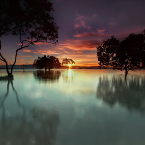 Scatteredly growing by Ledon Jasper Samoranos - Landscapes Waterscapes