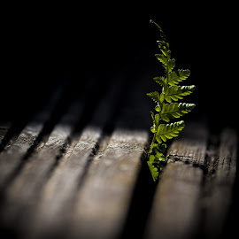 Life always finds a way by Malcolm Hare - Nature Up Close Other plants