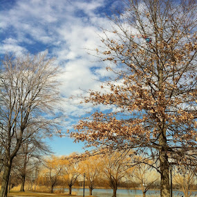 Meadow beauty by Joey Chen - Instagram & Mobile iPhone ( winter time, lake, flushing meadow park, city park, corona park )