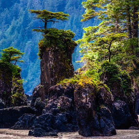 Sea Stacks by Carrie Cole - Landscapes Caves & Formations ( beaches, san josef bay, vancouver island, cape scott, sea stacks, british columbia )