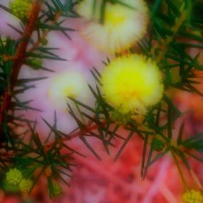Blurred by Amanda Daly - Digital Art Things