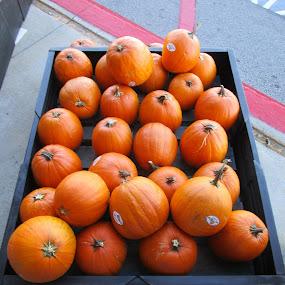 Orange you Ready for Fall! by David Jarrard - Public Holidays Halloween