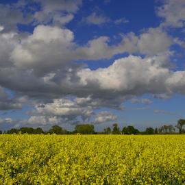 by Rita Bugiene - Landscapes Prairies, Meadows & Fields