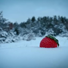 Frozen Berry by Zachary Swears - Nature Up Close Flowers - 2011-2013