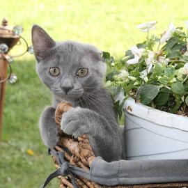kitten surprise by Elizabeth Sztejner Skillings - Animals - Cats Kittens ( cats, animals, nature, kittens )