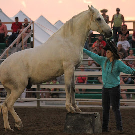 Horse Training Cowgirl by Brian  Shoemaker  - Animals Horses ( horse, rodeo, cowgirl, trainer )