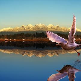 Mirror by Sunny Zheng - Digital Art Animals