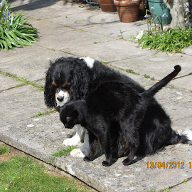 Dog and cat by Christopher Williams - Animals - Dogs Playing ( puss, friends, wales, dylan, garden )