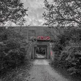 freight train graffiti by Joseph Martinez - Transportation Trains ( black and white, graffiti, d5200, train, bridge, nikon )