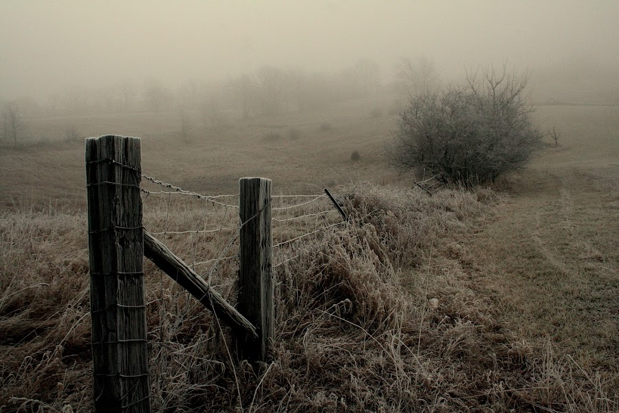 Fence Posts by Dennis Granzow - Landscapes Prairies, Meadows & Fields ( fence, michigan, meadow, frost, rural )