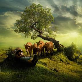 Wake Up, Cowboy... by Ketut Manik - Animals Other