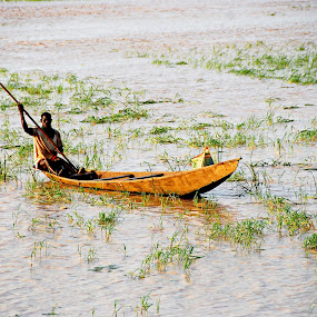 Boat on the river by Adelia Zamfir - Landscapes Waterscapes ( rice field, nigeria, boat, africa, river )