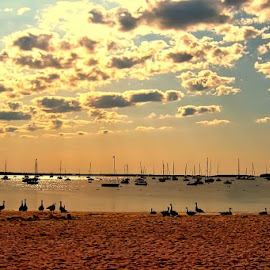 Cape Cod Sunset by Judy Laliberte - Novices Only Landscapes ( water, clouds, sunset, boats, beach, birds )