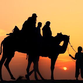 Rajasthan - Desert Transportation(Camels) by Vijay Singh - Transportation Other