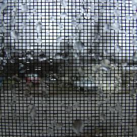 Rainy Day by Alexander Jackson - Novices Only Macro ( water, screen, macro, raindrops, wet, rain )