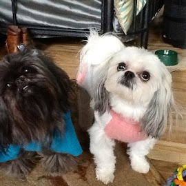 Missy and Mandy by Mary Bradford - Animals - Dogs Portraits