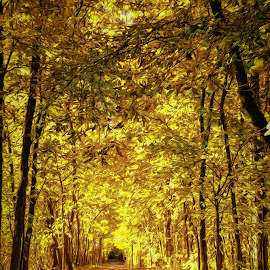 by Greg Croasdill - Landscapes Forests ( adventure, fall colors, autumn, fall )