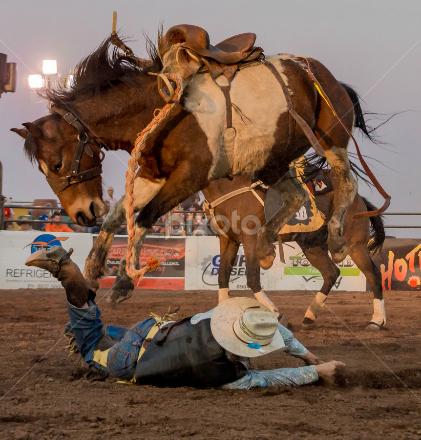 by Denise Flay - Sports & Fitness Rodeo/Bull Riding