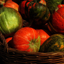 by Milanka Dimic - Nature Up Close Gardens & Produce ( orange, red, green, pumpkins, garden )
