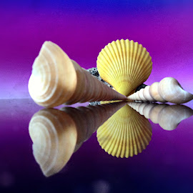 Seashells by Janette Ho - Artistic Objects Still Life