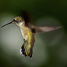 Hummer Hits the Brakes III by Shawn Thomas - Animals Birds