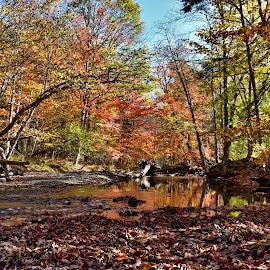 by John Geddes - Landscapes Forests