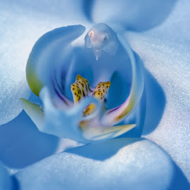Orchid by Susan Hartman - Flowers Single Flower ( orchid, flora, blue flower, flower )