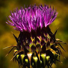 by Zoran Mrđanov - Flowers Flowers in the Wild (  )