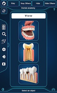 My Dental  Anatomy screenshot for Android