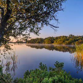 The Lake by Roy Hornyak - Landscapes Waterscapes ( calm, mirror, water, tree, blue, green, shrub, reflections, lake, reeds )