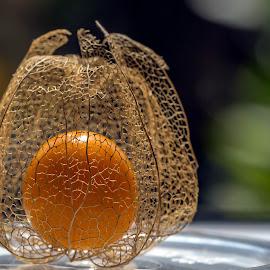 Orange Fruit by Adele Price - Food & Drink Fruits & Vegetables ( orange, fruit, patterns,  )