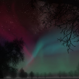 Misty Aurora by Nicole Rix - Painting All Painting ( aurora, trees, painting, misty, nightscape )