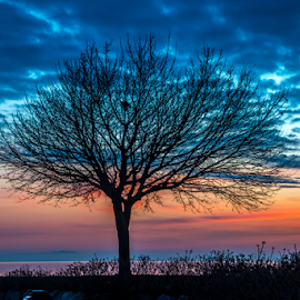 Fantastic Tree at the end of the Day by Keith Sutherland - Uncategorized All Uncategorized ( cresent beach, canada, west coast )