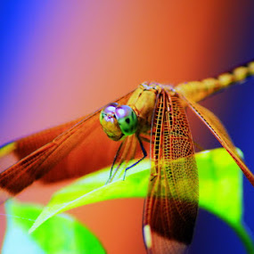 on the leaves... by Awai Bucchi - Animals Insects & Spiders