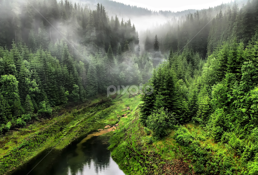 Foul weather by Daliana Pacuraru - Landscapes Weather ( pwcfoulweather-dq, daliana pacuraru, fog, romania, landscapes, rain, , renewal, green, trees, forests, nature, natural, scenic, relaxing, meditation, the mood factory, mood, emotions, jade, revive, inspirational, earthly )