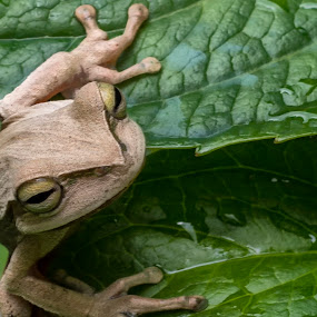 by Rogerio Ribas - Animals Amphibians