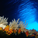 Colony of Hydroids