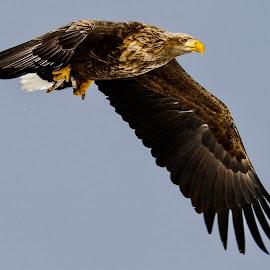 Caught two at once..... by Bernard Tjandra - Animals Birds