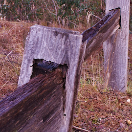 Fence by Sarah Harding - Novices Only Objects & Still Life ( fence, outdoors, novices only, brown, close up )