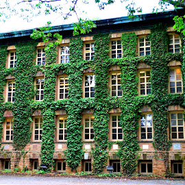Nassau Hall by Elena Stanescu-Bellu - Buildings & Architecture Other Exteriors ( building, exterior, green, windows, ivy, historical )