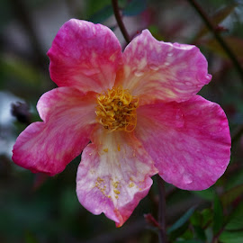 Flower by Sarah Harding - Novices Only Flowers & Plants ( plant, nature, outdoors, novices only, flower )