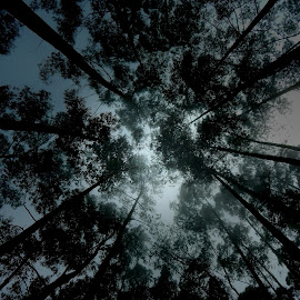 to the sky by Aritra Ghosh - Nature Up Close Trees & Bushes ( india )