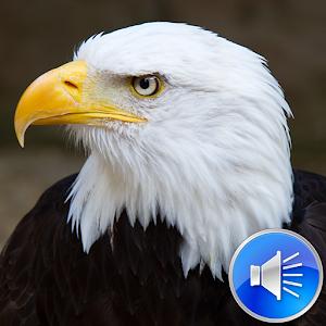 Eagle Sound Ringtone 9.0 Update