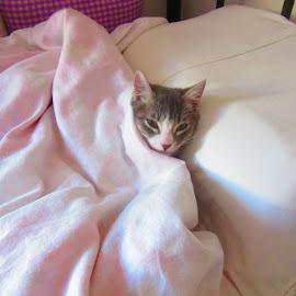 by Alegna Nehc - Animals - Cats Kittens