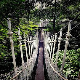 Bridge by Janette Ho - Instagram & Mobile iPhone (  )