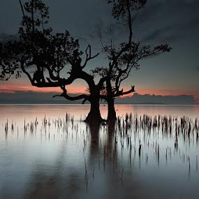 echos in the dark by Rodrigo Layug - Landscapes Waterscapes