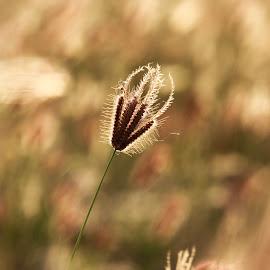 by Eko Utoro - Nature Up Close Leaves & Grasses