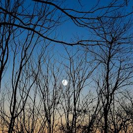 by Ocidem Graphix - Landscapes Forests
